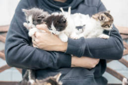 Foster volunteer holding her foster kittens in her arms.