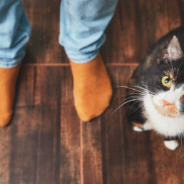 Cat sitting on the floor next to two feet in orange socks, gazing up at camera.