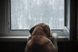 Dog looking out the window from a dark room.