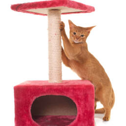Cat on a scratching post.