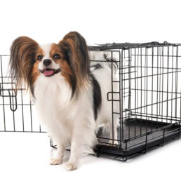 Little dog standing outside crate.