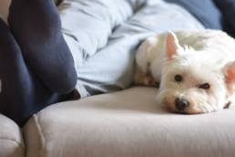 Man laying on bed in sweatpants with small white dog.