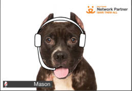 Smiling pit bull with headphone drawn on.