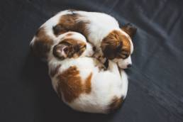 Two puppies curled up into each other and sleeping.