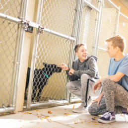 Two young men looking at a dog inside a kennel, smiling.