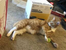 Cat rolling next to a box on the floor.