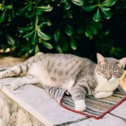 Cat lying on a ledge.