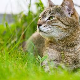 Cat lying in grass.