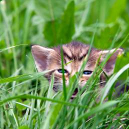 Small kitten in the grass.