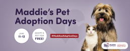 Maddie's Pet Adoption Days graphic with June 11-12 dates, dog and cat.