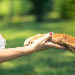 Human hand holding a dog's paw.