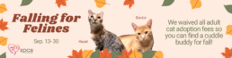 Banner stating adult cat adoption fees are waived Sep 13 through 30.